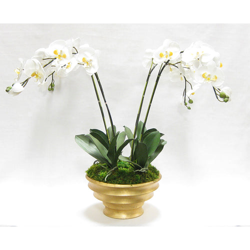 Resin Round Container Gold Leaf - White & Yellow Orchid Artificial - 4 Stems