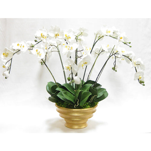 Resin Round Container Gold Leaf - White & Yellow Orchid Artificial - 8 Stems