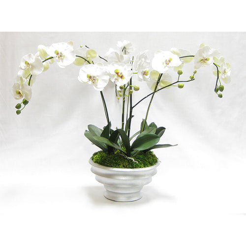 Resin Round Container Silver Leaf - White & Green Orchid Artificial - 4 Stems