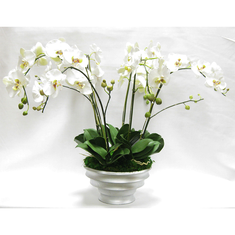 Resin Round Container Silver Leaf - White & Green Orchid Artificial - 6 Stems