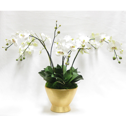Resin Round Container Gold Leaf - White & Green Orchid Artificial - 5 Stems