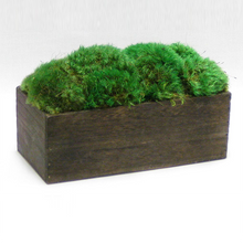 Load image into Gallery viewer, [WC10B-M] Wooden Rect Short Container Brown Stain - Preserved Moss