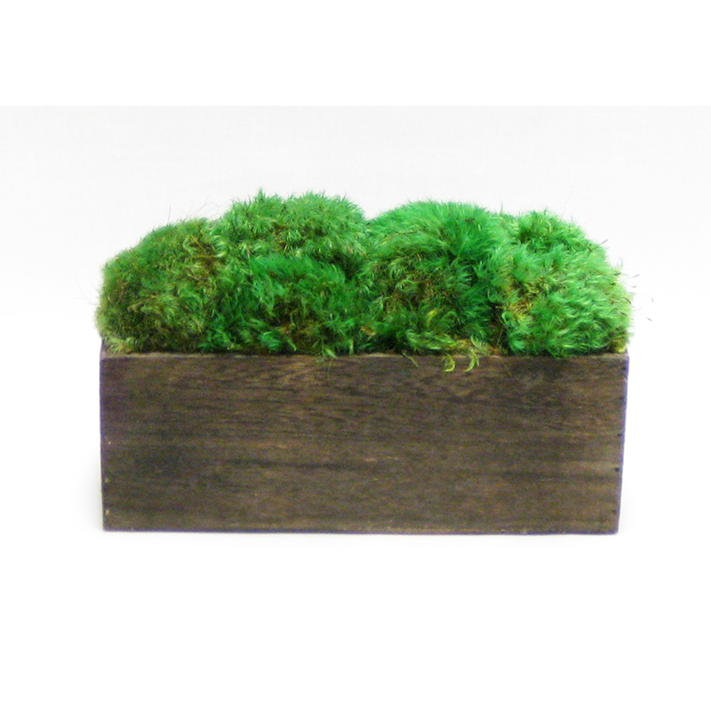 Wooden Rect Short Container Brown Stain - Preserved Moss
