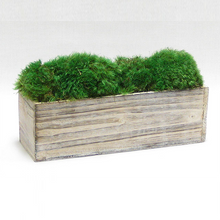 Load image into Gallery viewer, [WC10W-M] Wooden Rect Short Container White Stain - Preserved Moss