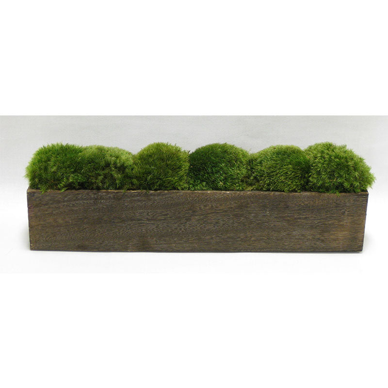 Wooden Long Container Brown Stain - Preserved Moss