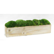 Load image into Gallery viewer, [WC20N-M] Wooden Long Container Natural - Preserved Moss