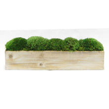 Load image into Gallery viewer, Wooden Long Container Natural - Preserved Moss