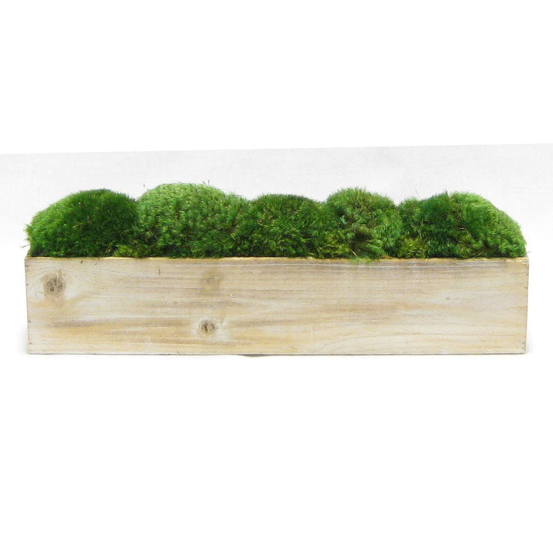 Wooden Long Container Natural - Preserved Moss
