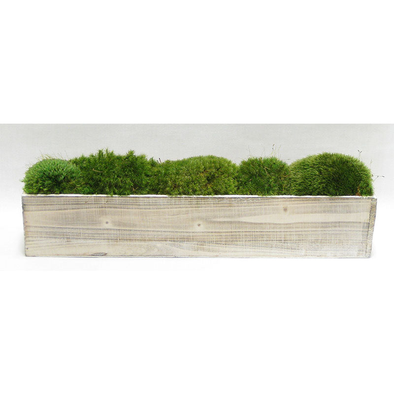 Wooden Long Container Whitewash Stain  - Preserved Moss