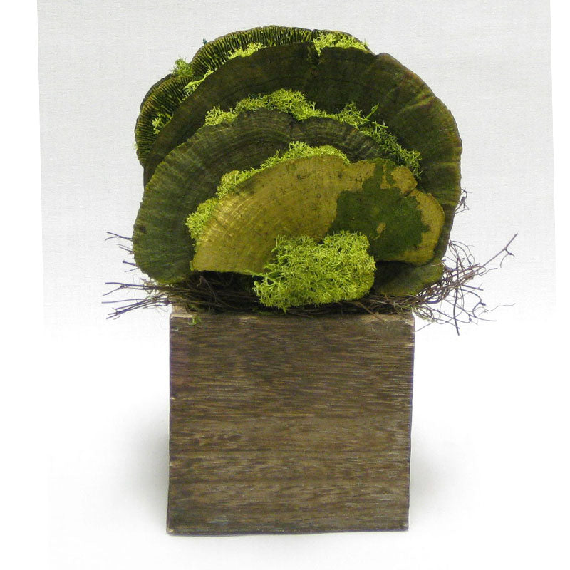 Wooden Cube Container Brown Stain - Sponge Mushrooms Green..