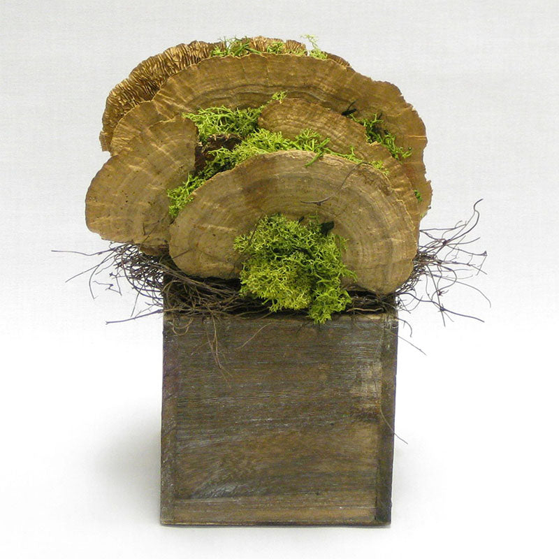 Wooden Cube Container Brown Stain - Sponge Mushrooms Natural..