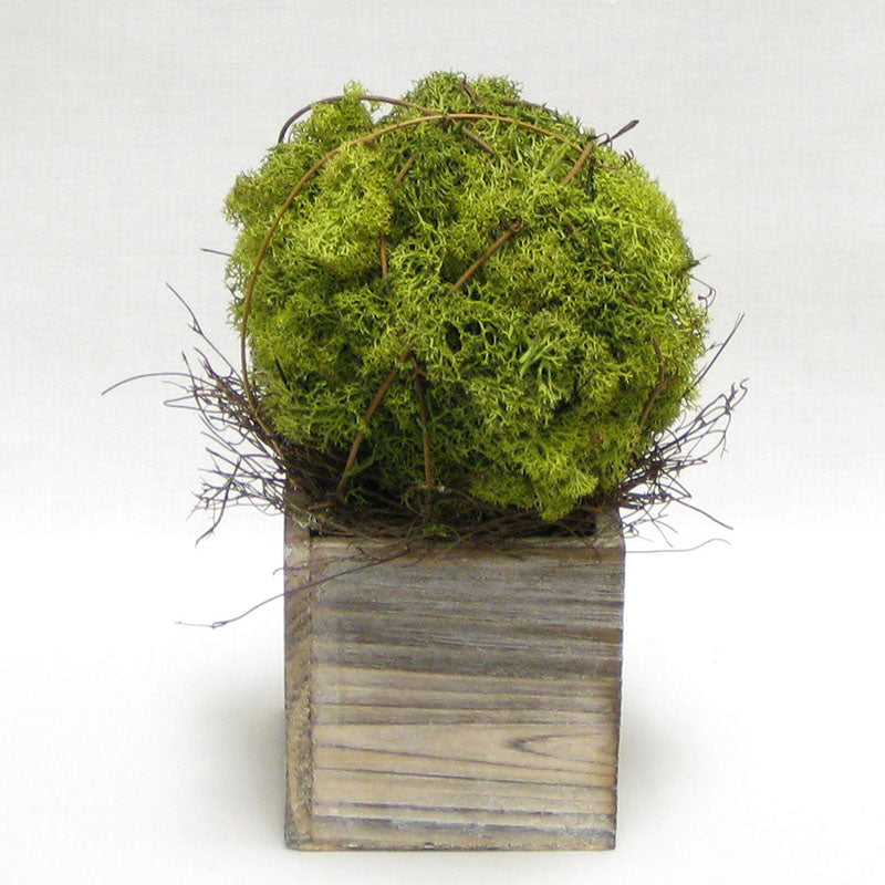 Wooden Cube Container Whitewash Stain- Reindeer Moss Topiary Ball Medium..