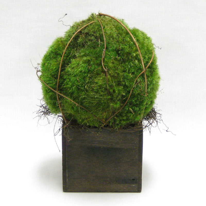 Wooden Cube Container Brown Stain - Preserved Moss Topiary Ball Small..