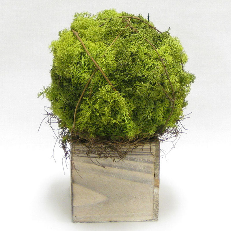Wooden Cube Container Whitewash Stain - Reindeer Moss Topiary Ball Large..