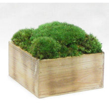 Load image into Gallery viewer, [WC73N-M] Wooden Short Container Natural - Preserved Moss