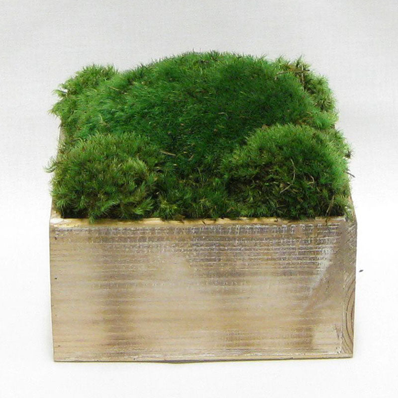 Wooden Short Container Natural - Preserved Moss