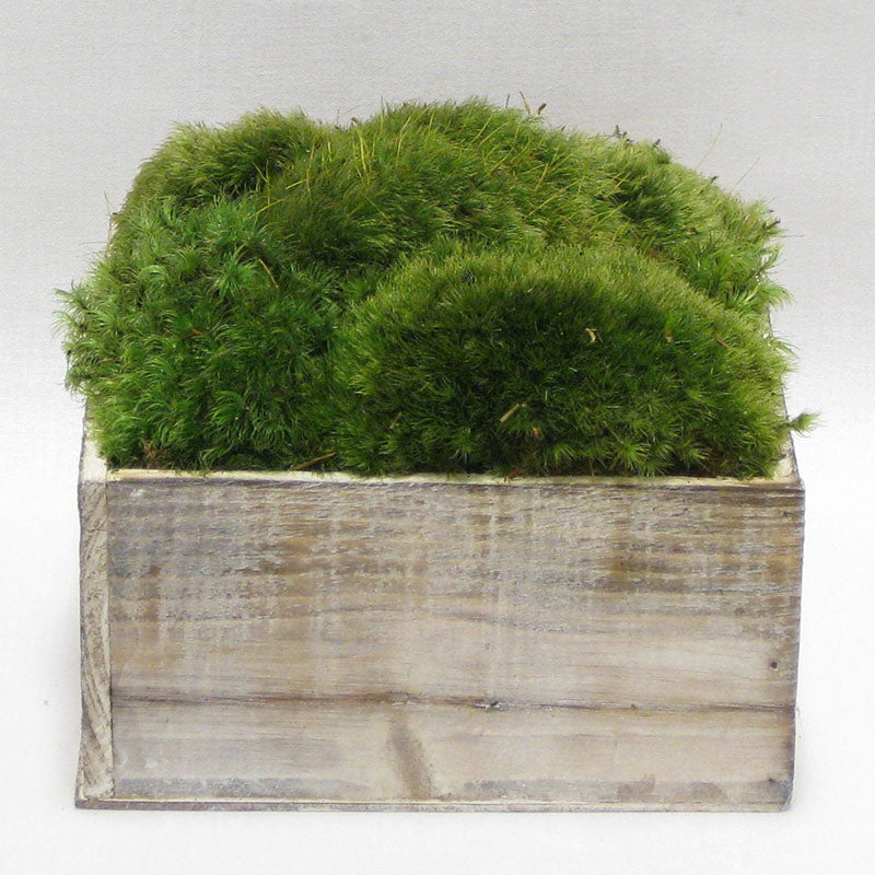 Wooden Short Container Whitewash Stain - Preserved Moss