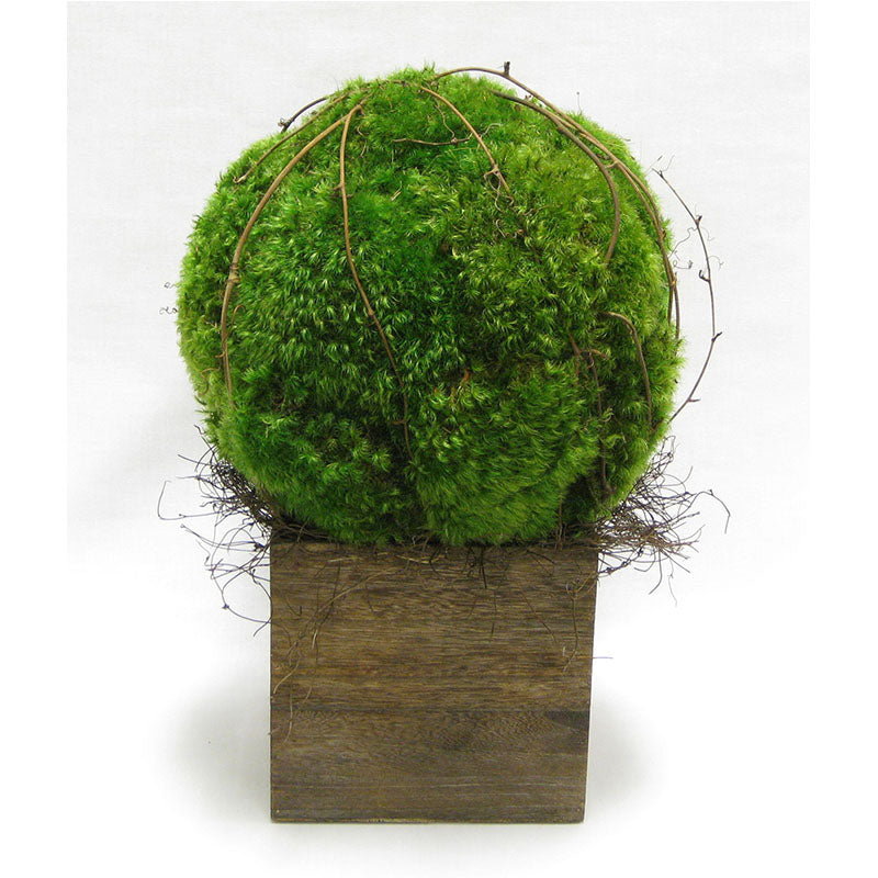 Wooden Cube Container Brown Stain  - Preserved Moss Topiary Ball Large..