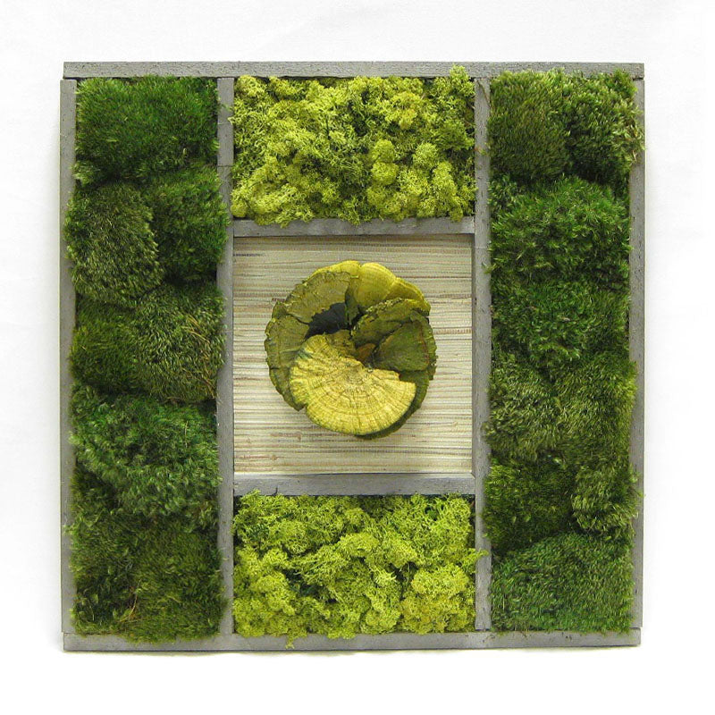 Wooden Frame 24 x 24 - Preserved Mixed Mosses w/Sponge Mushrooms Green