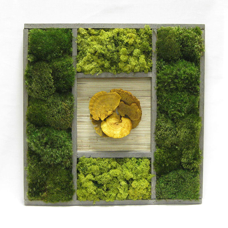 Wooden Frame 24 x 24 - Preserved Mixed Mosses w/Sponge Mushrooms Yellow