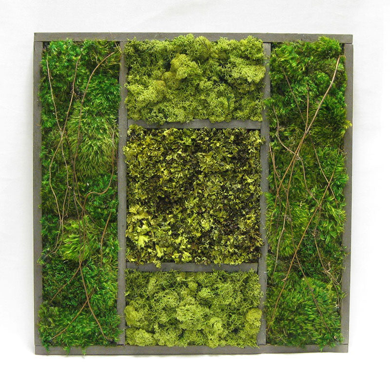 Wooden Frame 24 x 24 - Preserved Mixed Mosses