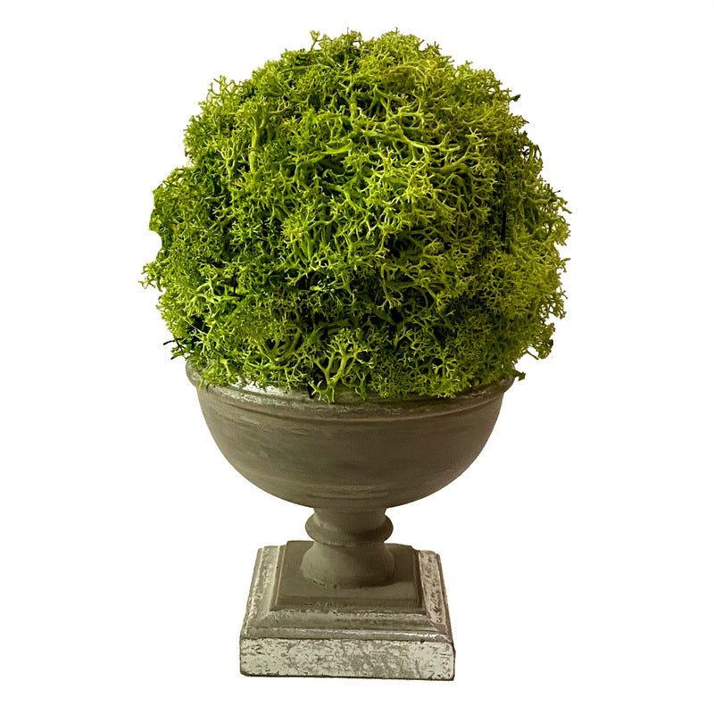 Copy of Small Wooden Footed Bowl Dark Grey - Reindeer Moss Topiary Ball Basil