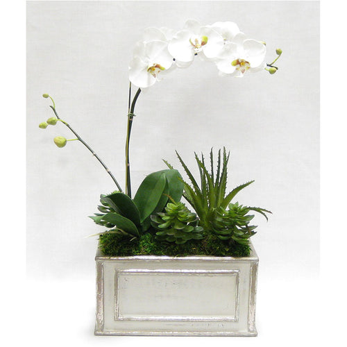 Wooden Rect Grey Silver Container - White & Green Orchid w/Succulents