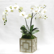 Load image into Gallery viewer, [WSPQ-GS-ORGR] Wooden Square Container w/ Square - Green w/ Antique Gold - White & Green Orchid Artificial