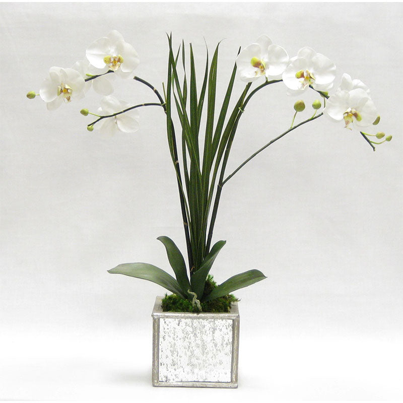 Wooden Square Mirrored Container Silver Antique - White & Green Double Orchid Artificial with Natural Palm