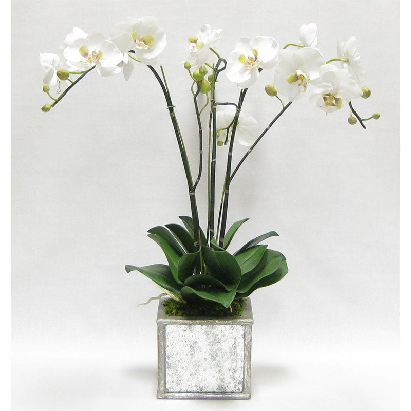 Wooden Square Planter Small - Silver Antique w/ Antique Mirror & Medallion - White & Green Orchid Artificial