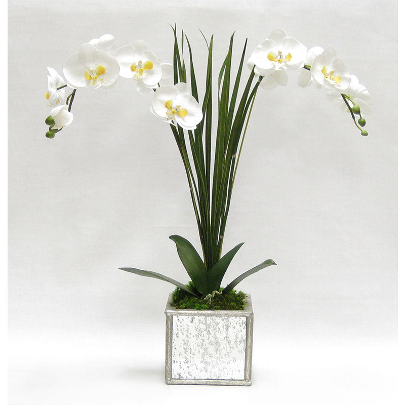 Wooden Square Mirrored Container Silver Antique - White & Yellow Double Orchid Artificial with Natural Palm