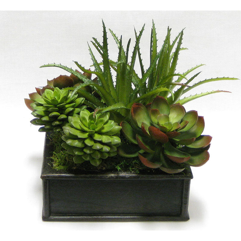 Wooden Short Square Container Black Antique - Succulents Green & Burgundy Artificial