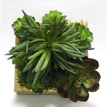 Load image into Gallery viewer, [WSSP-GG-SUGR] Wooden Short Square Container Gray Green w/ Gold - Succulents Green Artificial