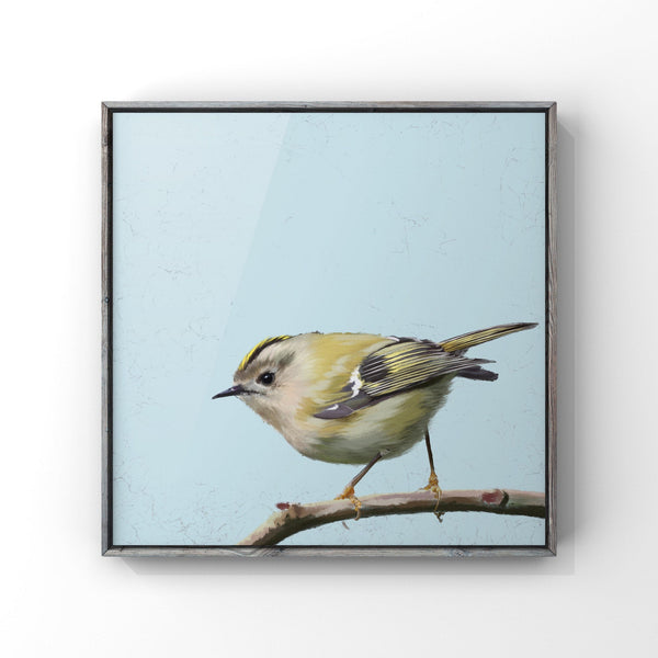 Goldcrest, Giclee print of an original painting, British garden birds