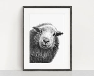 Herdwick Sheep giclee print. Sheep ink. Sheep drawing. Japanese Ink Art Print from an original ink drawing.