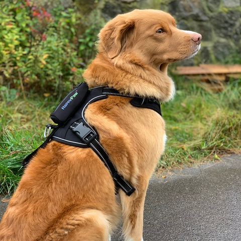 Correct fitting of your dog harness