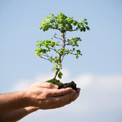Planting a tree can contribute to the wellbeing of the Planet