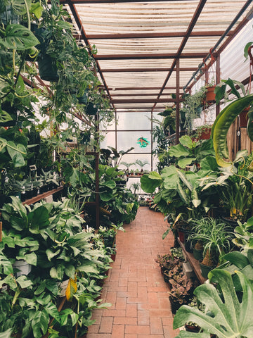 How To Buy House Plants