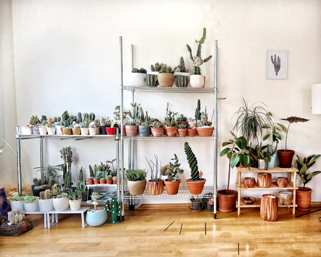 Acclimating House Plants