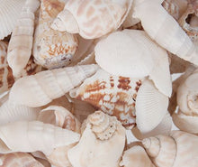 Load image into Gallery viewer, Sea Shells (50 piece)
