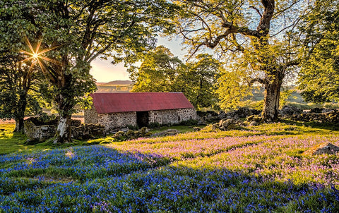 Stroll around the Bluebells at Emsworthy Common and Holwell Lawn