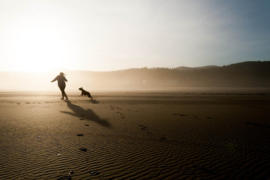 The Best walks for dogs in Cornwall and beach friendly dog walks
