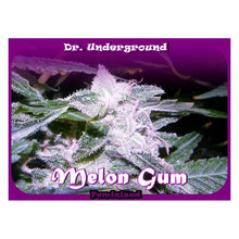 Load image into Gallery viewer, Melon Gum - Feminised Seeds