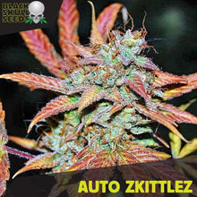 Load image into Gallery viewer, Auto Zkittles - Autoflowering