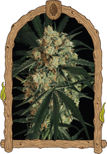 Load image into Gallery viewer, A.A.A - Autoflowering