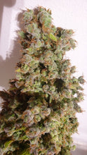 Load image into Gallery viewer, Auto Malawi x Northern Lights - Autoflowering Seeds