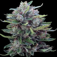 Load image into Gallery viewer, Bangi Haze x Ethiopian - Regular Seeds