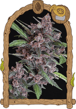 Load image into Gallery viewer, Black Lemon Auto - Autoflowering