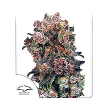 Load image into Gallery viewer, Blueberry - Feminised Seeds