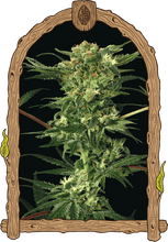 Load image into Gallery viewer, Devil Kush - Regular